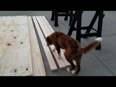 Build Dog Agility A-Frame (Step 1)