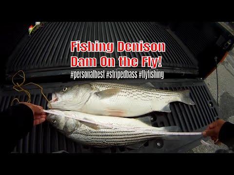 Denison Dam For Fly Fishing Fun!