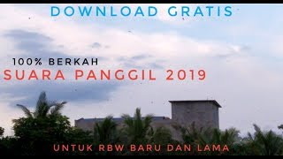 Suara Panggil Burung Walet Kalimantan Tengah 2019