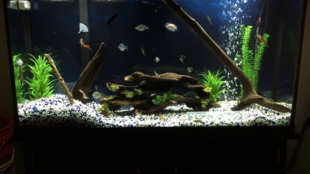 Freshwater aquarium driftwood the image for Driftwood for fish tank