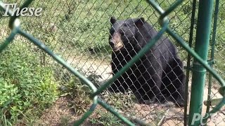 Bears Removed from Mobile Zoo Have New Home