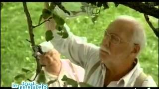 """Bande annonce """"Une hirondelle a fait le printemps"""" - Archive INA"""