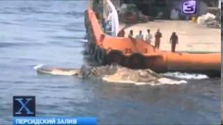 Необъяснимые животные видео  Труп гигантского доисторического чудовища всплыл в Персидском заливе!!!