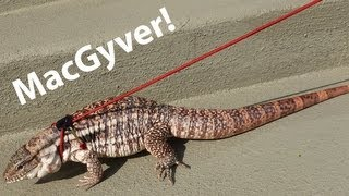 ☜ MacGyver on a Leash