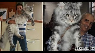 Cute is Not Enough - Cute Dogs and Cats Doing Funny Things 2019 #14 - FunnyAnimals