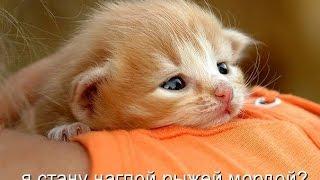 Смешные картинки про кошек и котят Выпуск № 7 FUNNY CATS СМЕШНЫЕ КОШКИ