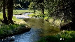 Звуки природы…Щебетание птиц, журчание ручья, лес…