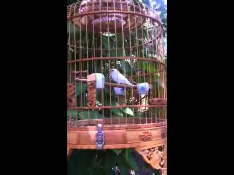 Chim se bach tang cua quyet