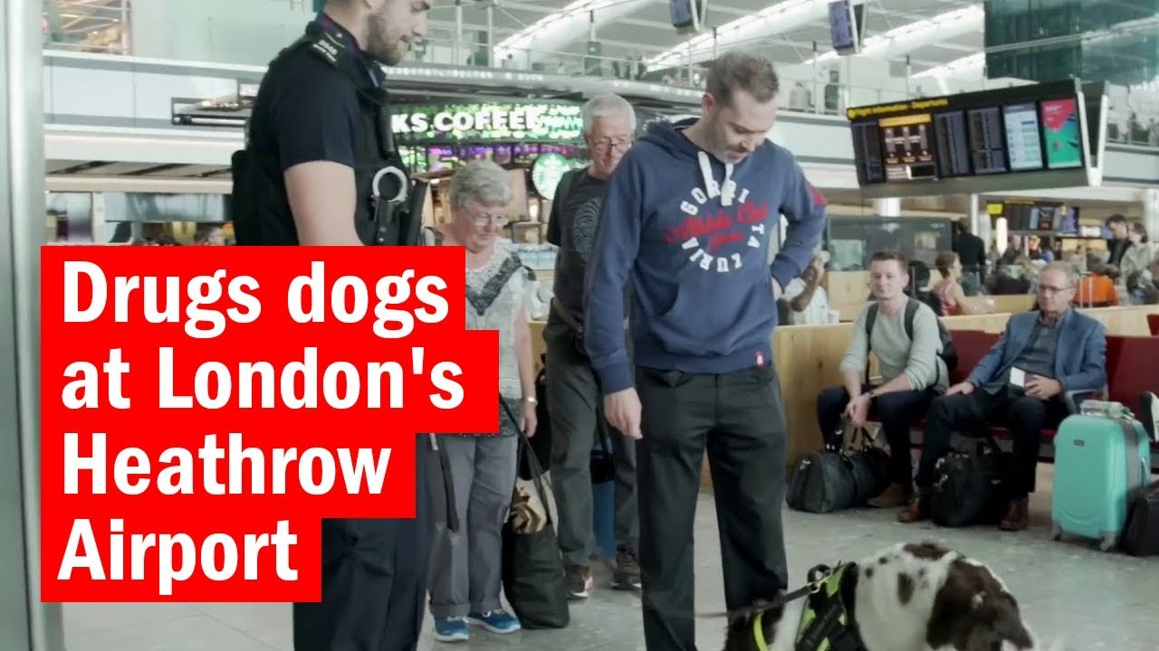 Drugs dogs at London's Heathrow Airport | How London Works | Time Out London
