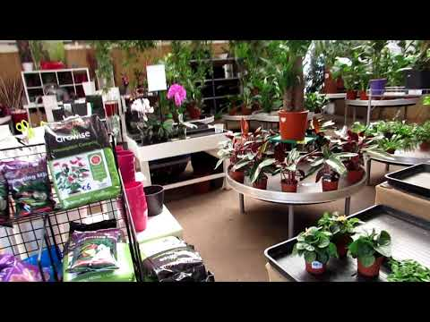 Our Plant Shopping FUN day at Urban Plant Life Garden Centre - VLOG