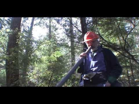 Beloved Whidbey Island forest will grow on