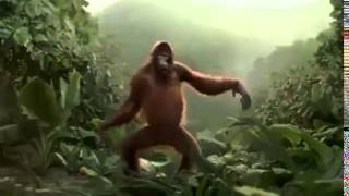 happy monkey dance funny :)