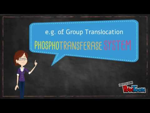 Group Translocation: The Phosphotransferase System