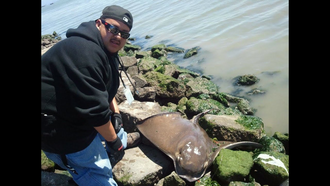 Mud marlin fishing in northern california youtube for Sfbay fishing report