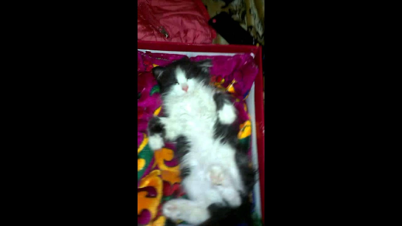 Мой котёнок спит в человеческом позе