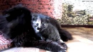 Первый котенок