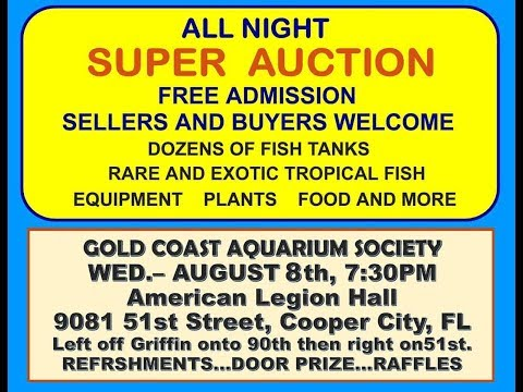 Gold Coast Aquarium Society Fish Auction
