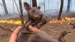 Avustralyadaki Durmayan Yangınlarda 1.25 Milyar Hayvan Telef Oldu. Bu Hayvanları Kurtarmak İçin....