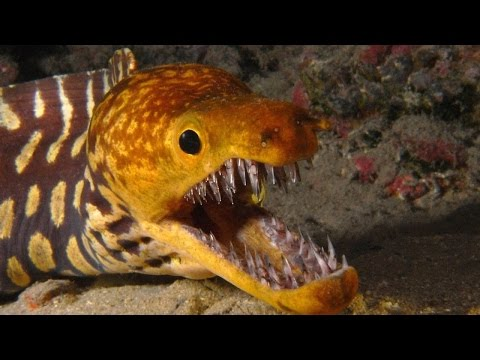 Denizin Derinliklerindeki En Korkunç 10 Yaratık