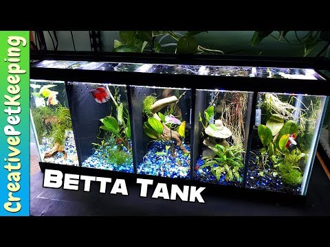 Divided Betta Tank Setup | Split Betta Fish Tank [20 Gallon]