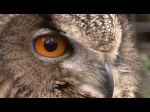 Turbary Woods Trailer