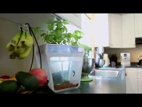 Home Aquaponics Kit  Self Cleaning Fish Tank That Grows Food by Nikhil