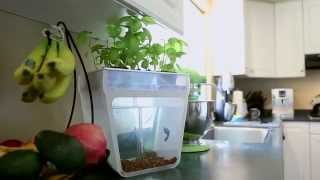 Home Aquaponics Kit- Self-cleaning Fish Tank That Grows Food By Nikhil & Alejandro — Kickstarter