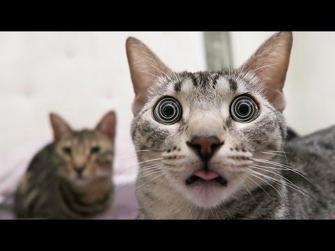 HYPNOTIZED KITTY!