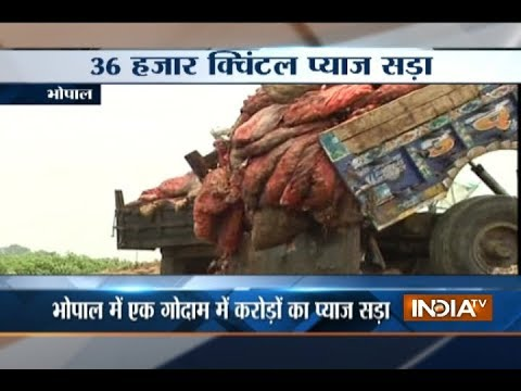 36000 quintals of onions rotted in Madhya Pradesh