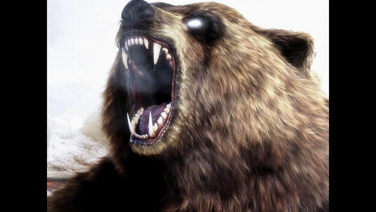 Рык медведя гифки