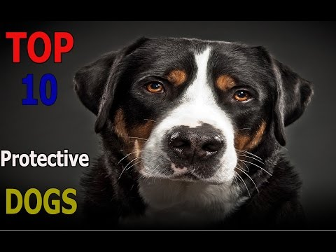 Top 10 Protective dog breeds | Top 10 animals