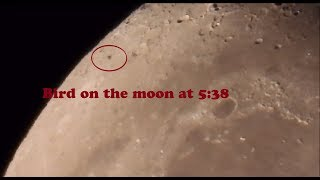 Life on the moon ?! Part 1 .Moon super zoom in 4K with Nikon P1000