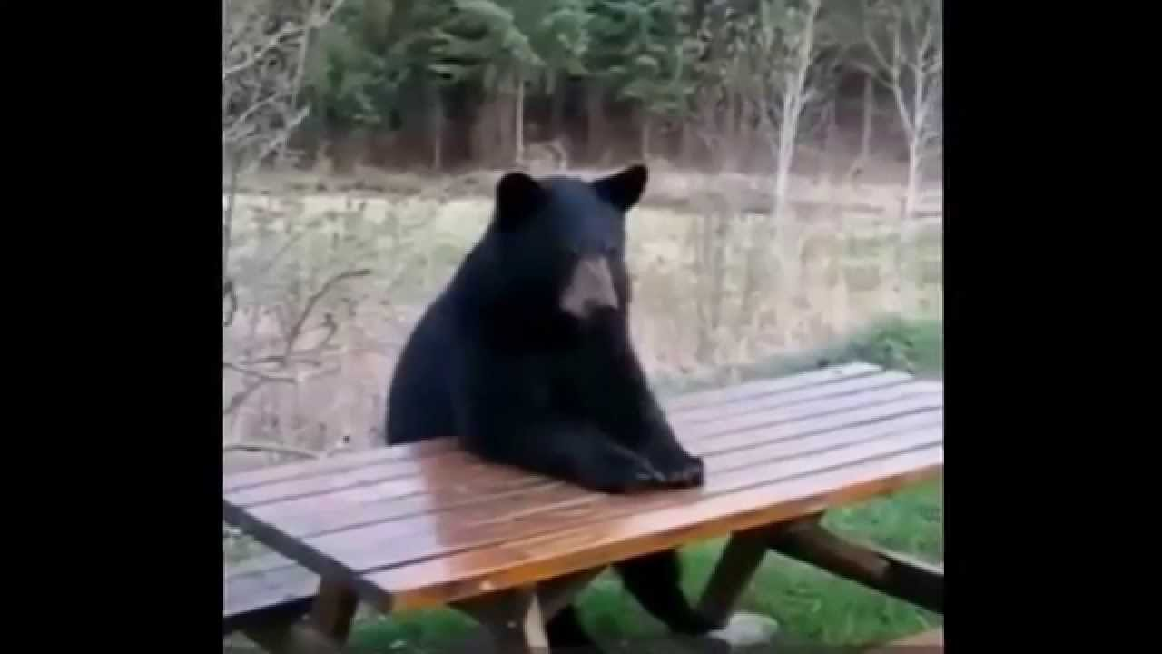 Image result for bear at picnic table