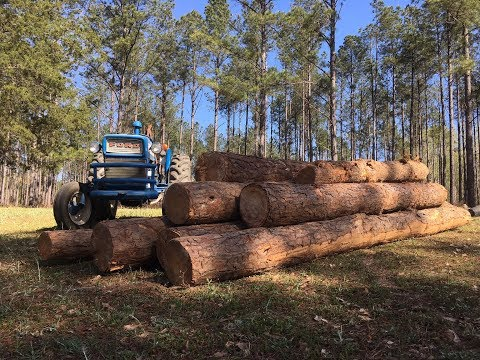 MORE FREE LOGS for the SAWMILL!!
