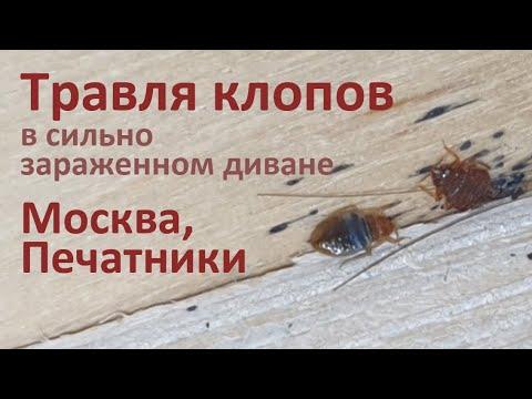 Видео: Травля клопов в сильно зараженном диване. Москва, Печатники.