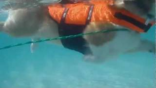 Dog Paddle & Beach /  いぬかき 白浜海岸 20110711 Goro@welsh Corgi