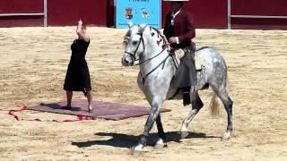 Espectáculo de caballos en la plaza de toros de Benamocarra