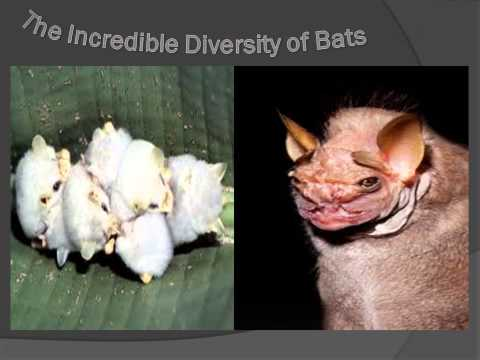 Bats, Insecticides and Organic Farming:Preserving Natural Capital for Agriculture