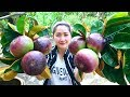 Yummy Star Apple Sweet - Star Apple Dessert - Cooking With Sros