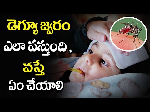 Dengue fever symptoms and treatment - Mana Arogyam Telugu Health Tips