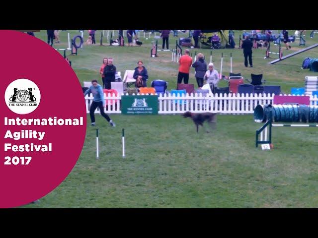 Kennel Club Starters Cup - Large Semi Final | International Agility Festival 2017