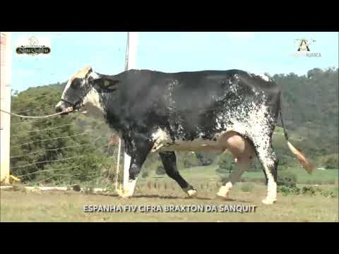 LOTE 11 ESPANHA FIV CIFRA BRAXTON DA SANQUIT