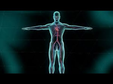 How Does Human Circulatory System Works
