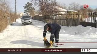В Астане массово усыпляют бродячих собак