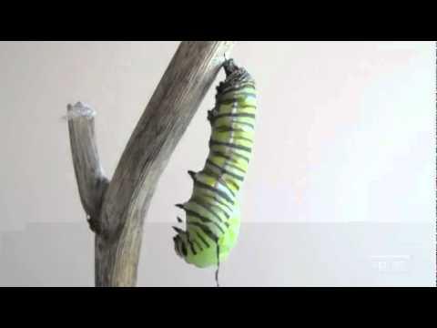 Con sâu biến thành bướm