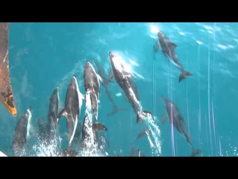 Dolphins at Cape Campbell