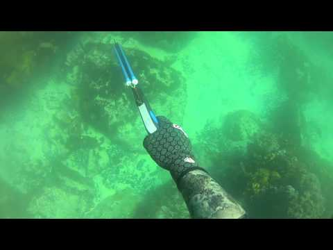 Central Coast Spearfishing - Vol 1