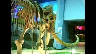 видео Музей-театр «Ледниковый период»