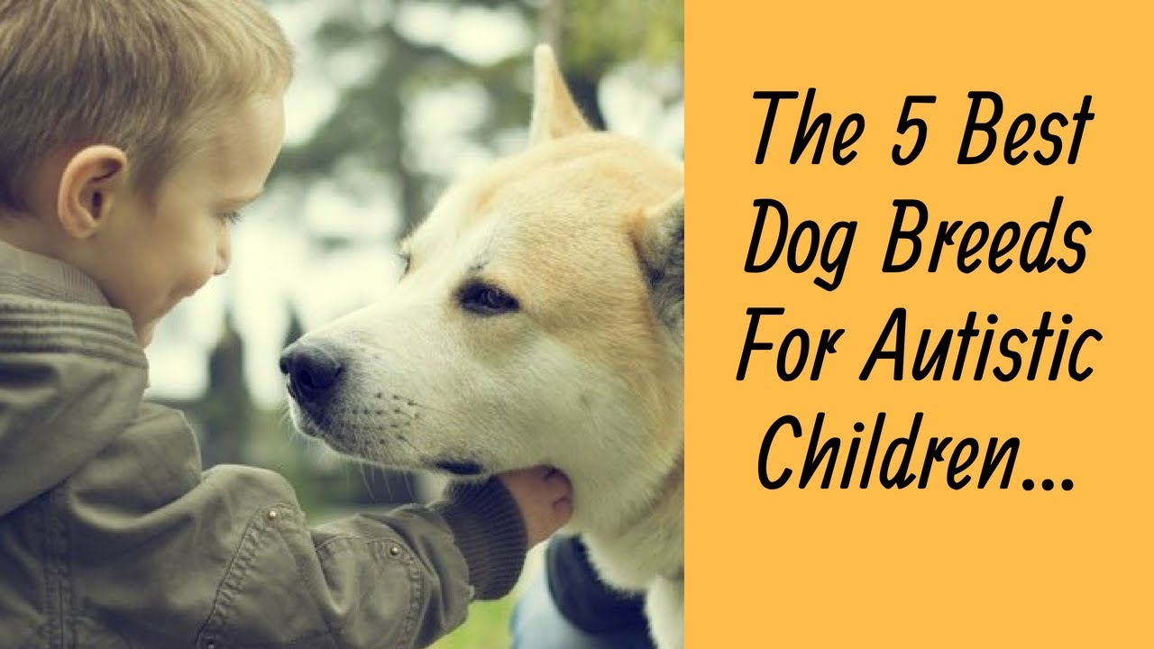 best dog breeds for autistic children