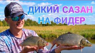 Дикий САЗАН на фидер. Рыбалка 2020. Озеро Сартлан